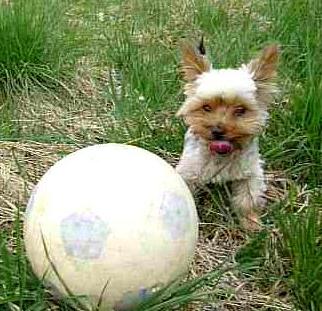 Hund Platz beibringen ohne Leckerli