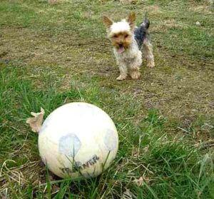 Hundeschule Kosten - Hundetraining für Alle