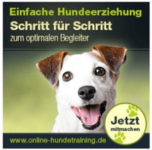 Aktueller Kurs Online Hundetraining