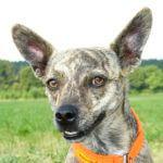 Unser Partner die Hundeschule Amperland