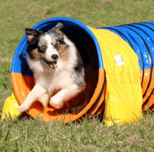 Hundetunnel Trainingstunnel