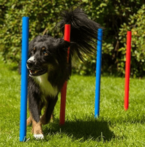 Agility Training Set mit dem Hund