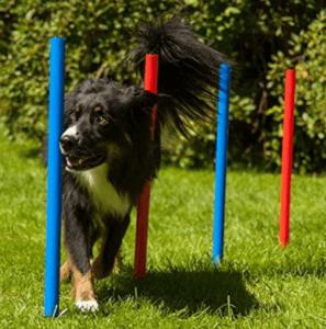 Agility Training Set mit dem Hund