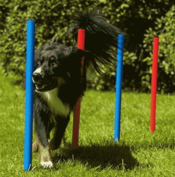 Agility-Training-Set für Hunde