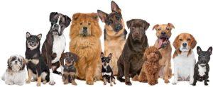 Familienhunde Hundeschule Kosten und Preise