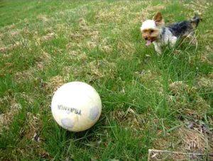 Hundeflöhe im Garten holen Bild
