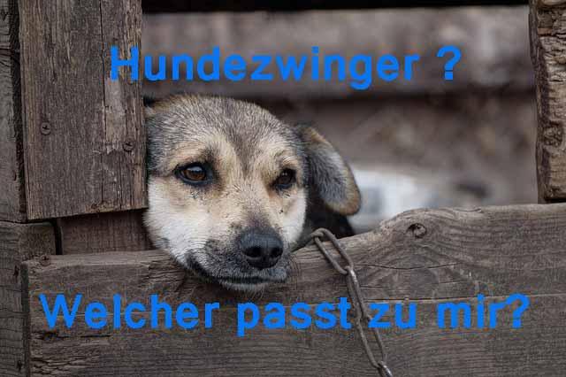 Hundezwinger oder Hundehütte ?